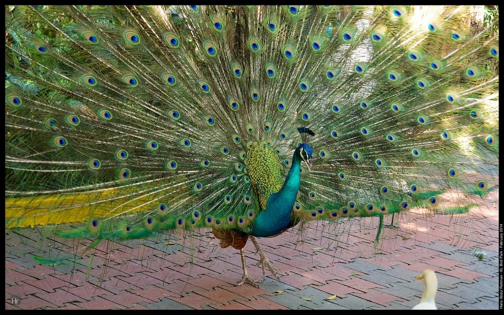 140223 KL Bird Park 25.jpg