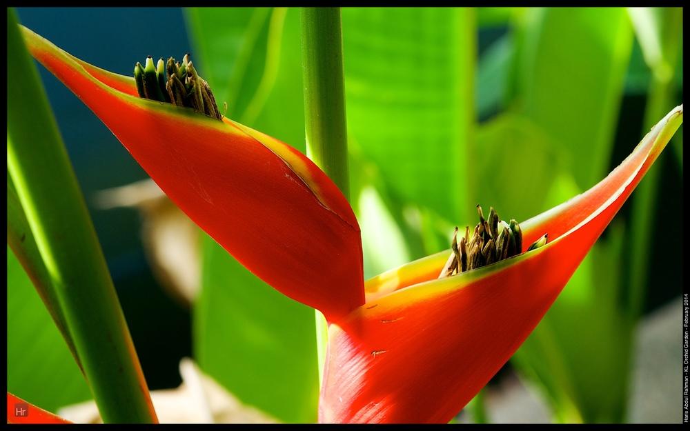 140223 Orchid Garden 36.jpg