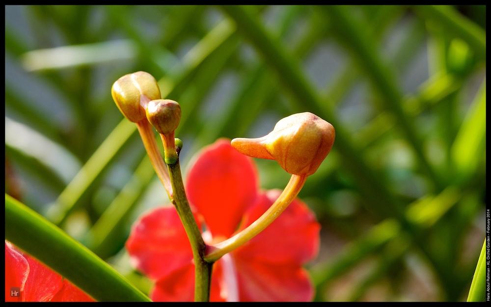 140223 Orchid Garden 43.jpg