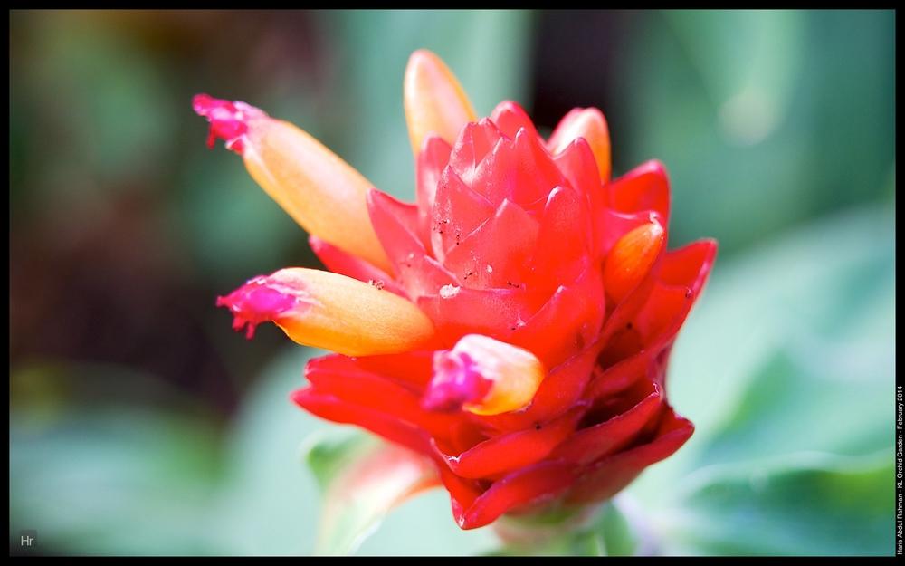 140223 Orchid Garden 54.jpg