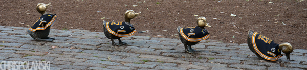 Boston Strong Ducklings