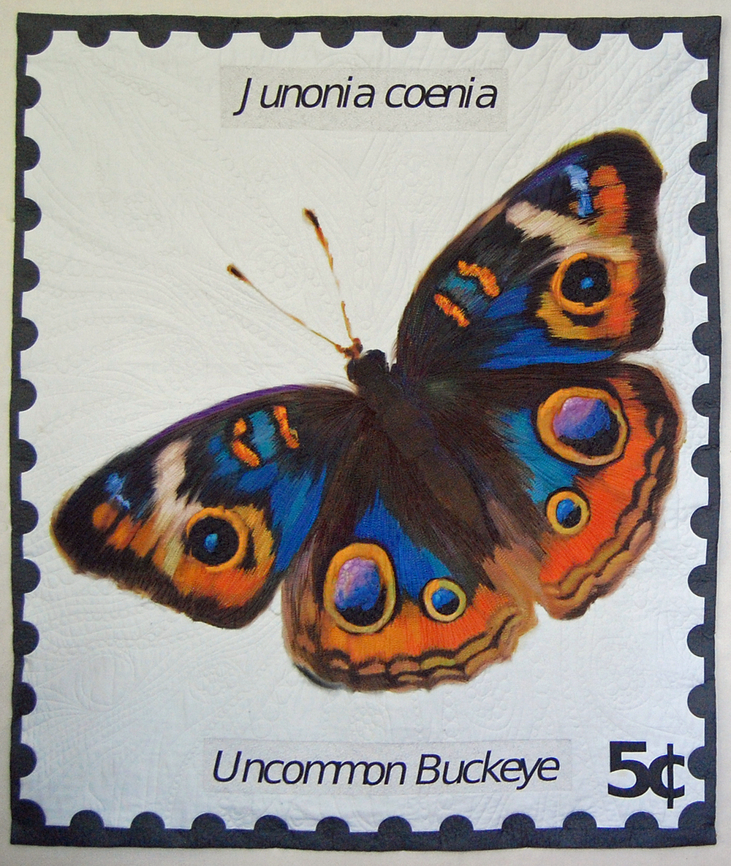 Uncommon Buckeye