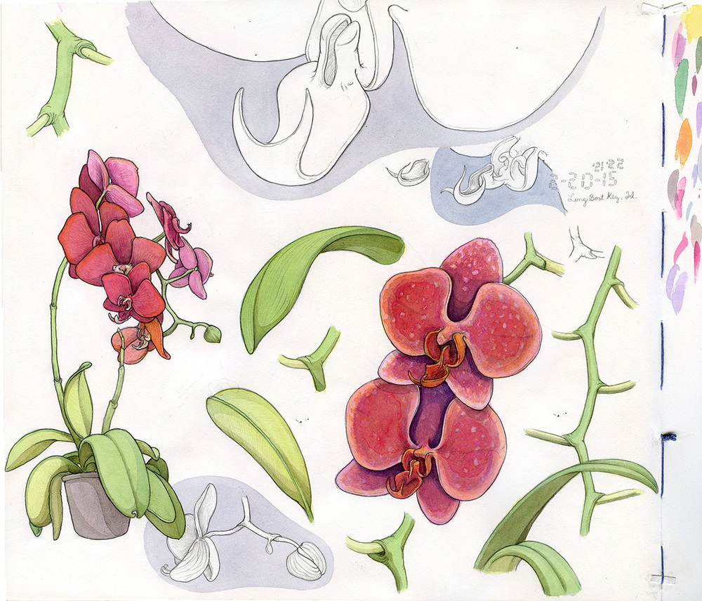 sketchbook_orchids_web.jpg