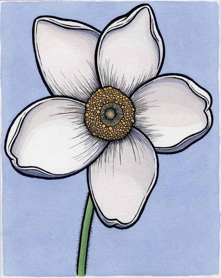 Sundrop Windflower