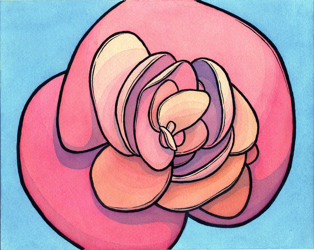 "Begonia Baloney study 8"" x 10"""