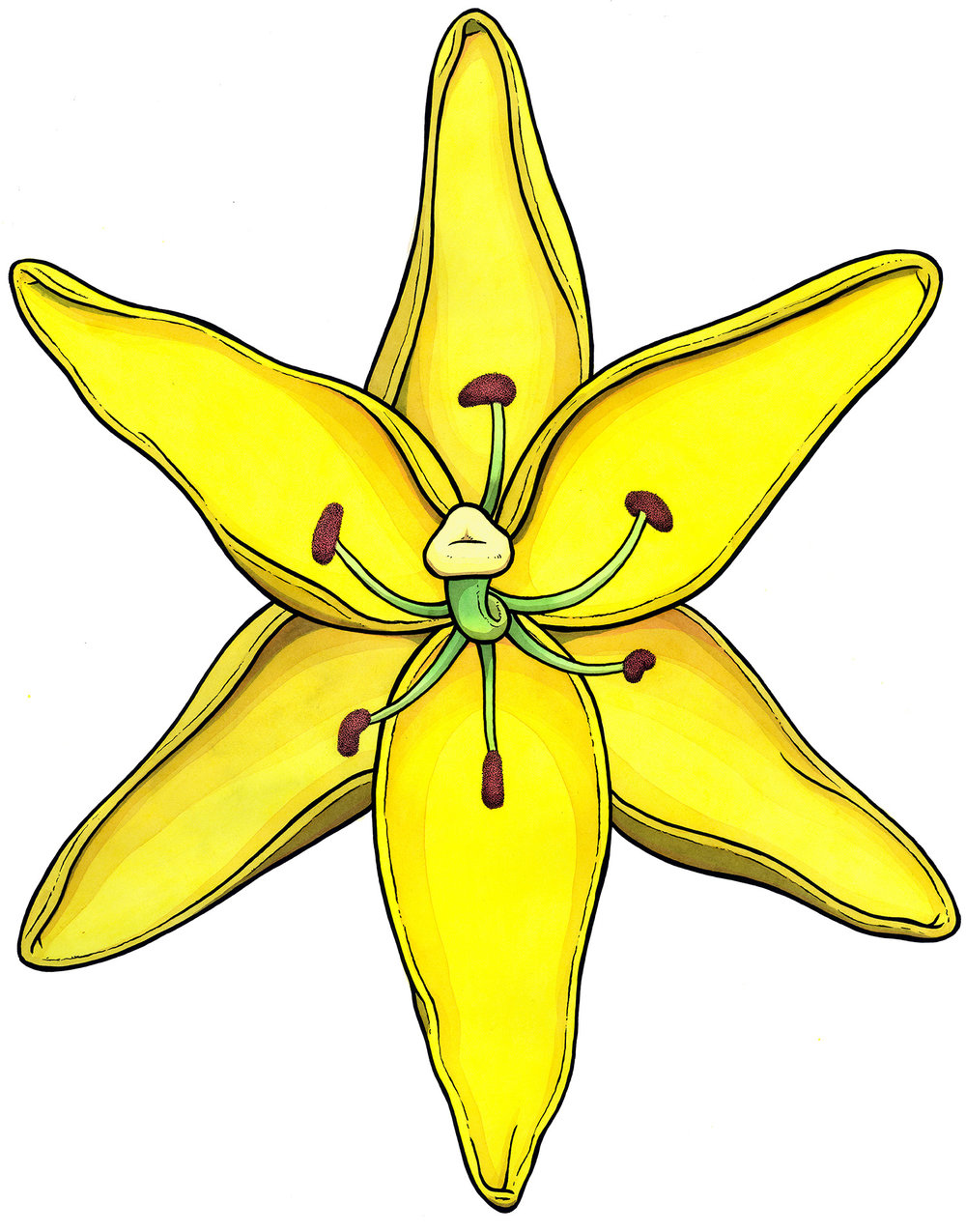 YellowLilly-web.jpg