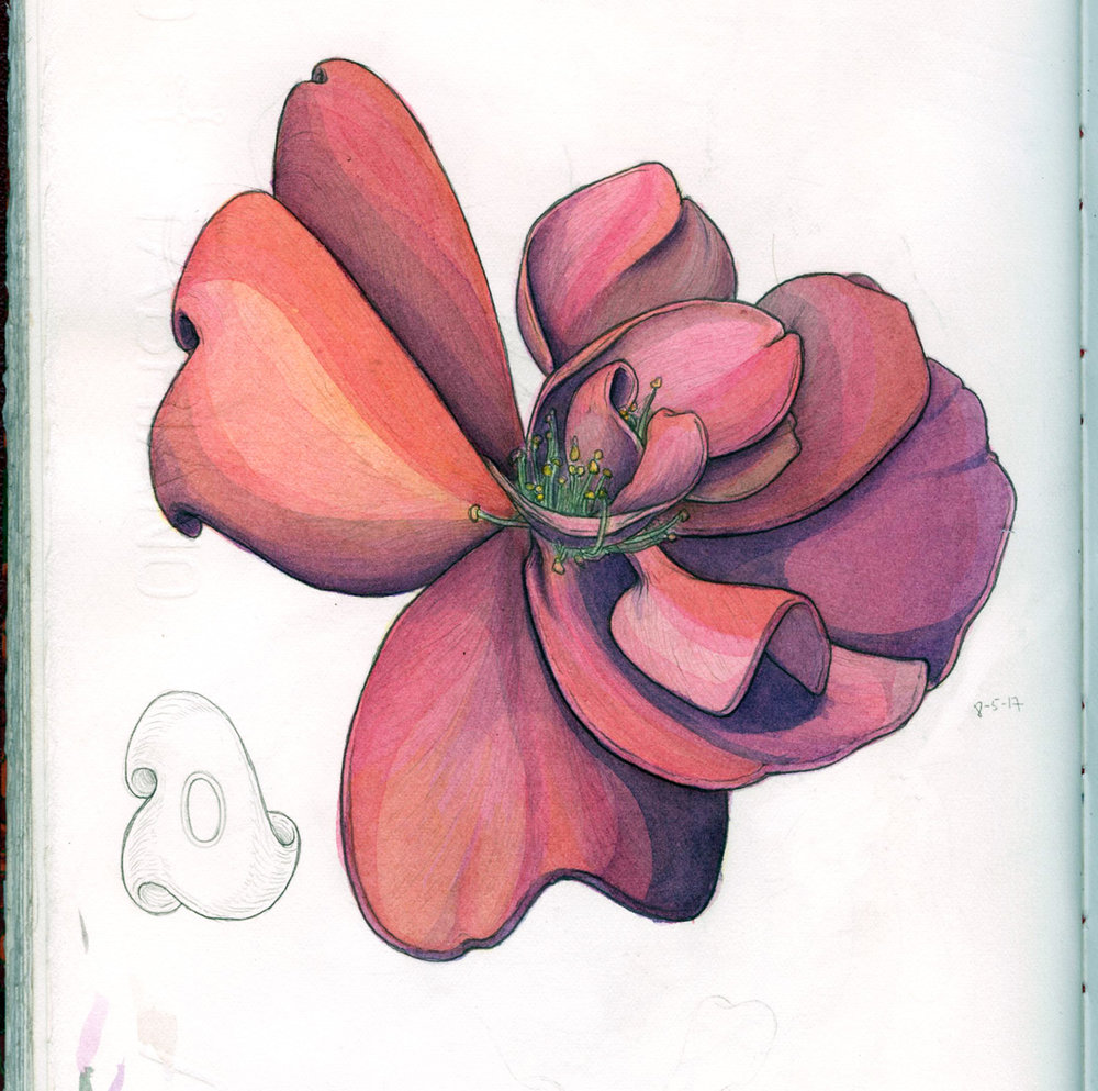 messy pink flower sketchbook-web.jpg