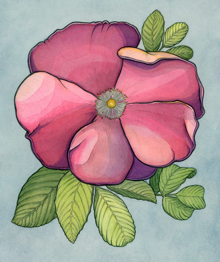 "Smooth Rose 9"" x 11"""