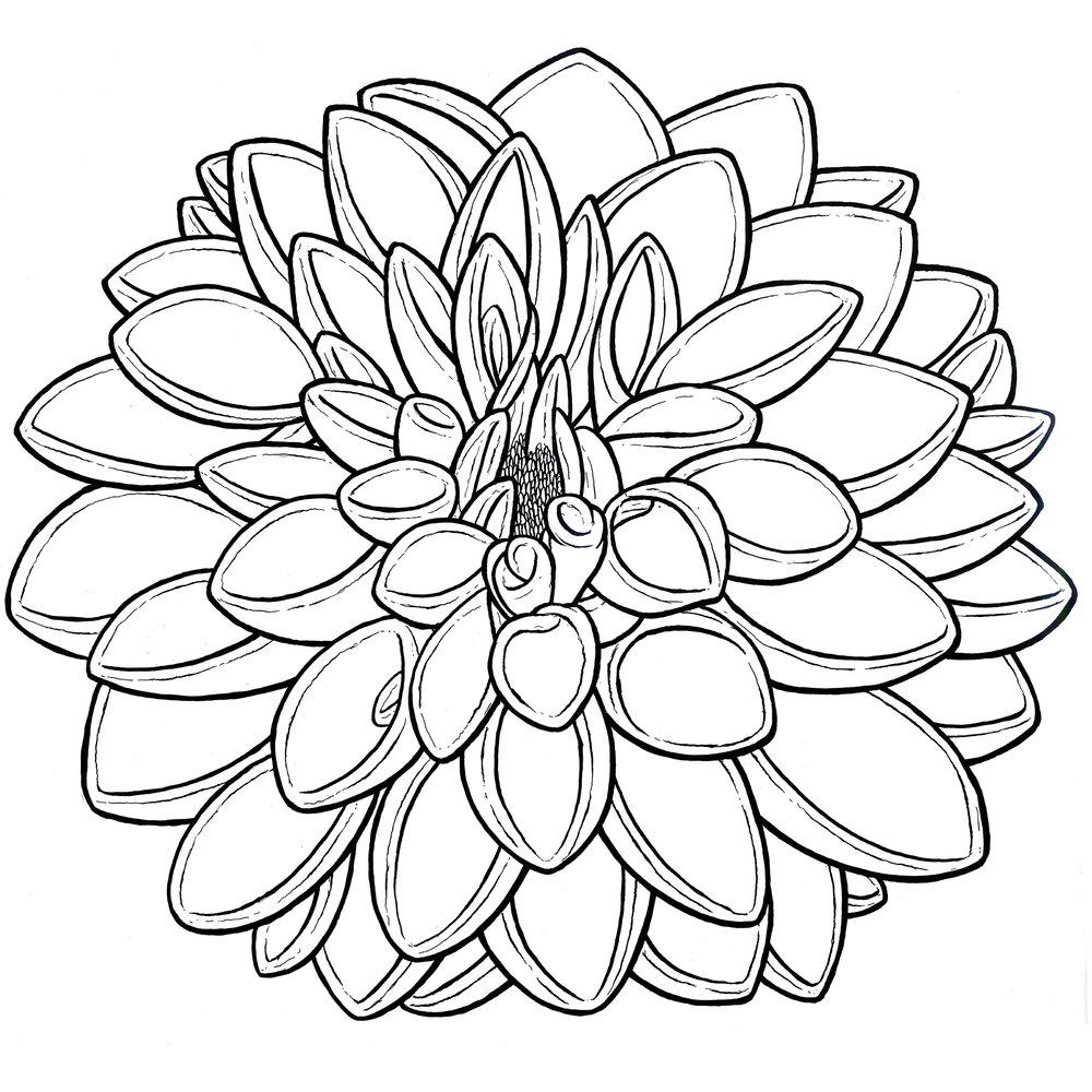 dahlia-ink-web.jpg