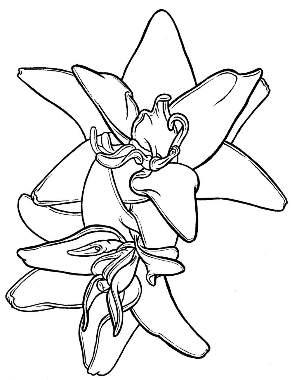 2orchids-web.jpg
