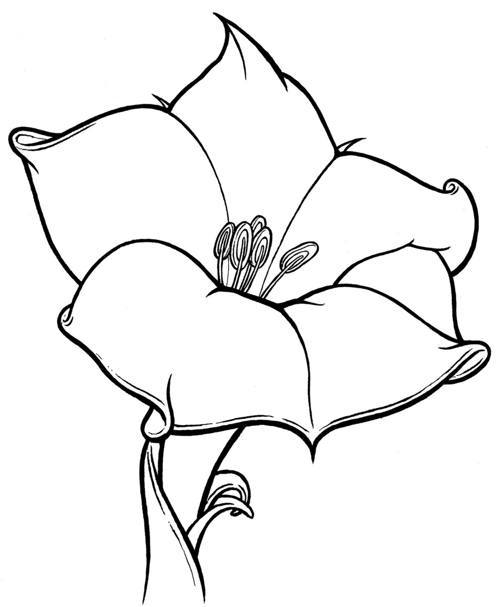 lily-web.jpg