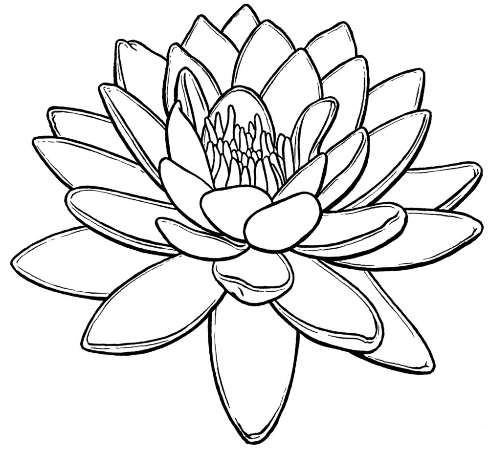 waterlily-web.jpg