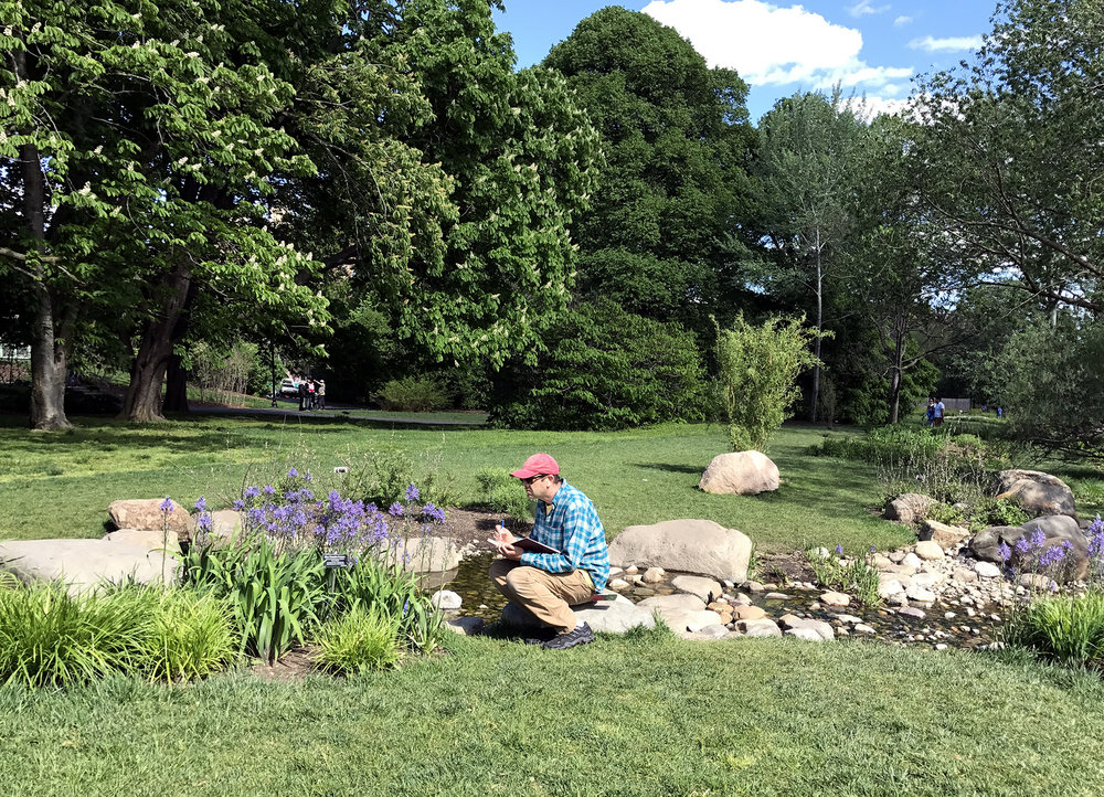Working from life at the Brooklyn Botanic Garden, 2017.