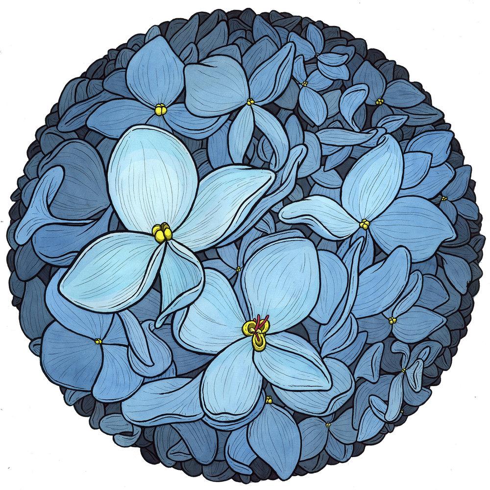 celeste-hydrangea-color-web.jpg
