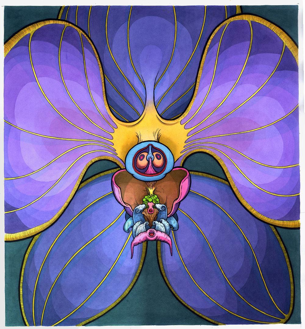 rainbow orchid-web.jpg