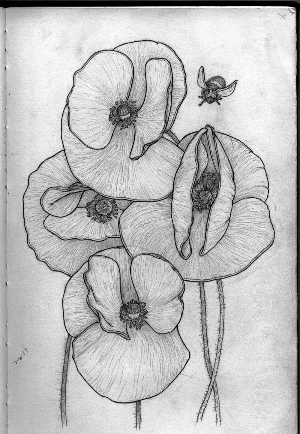 skethbook4poppies.jpg