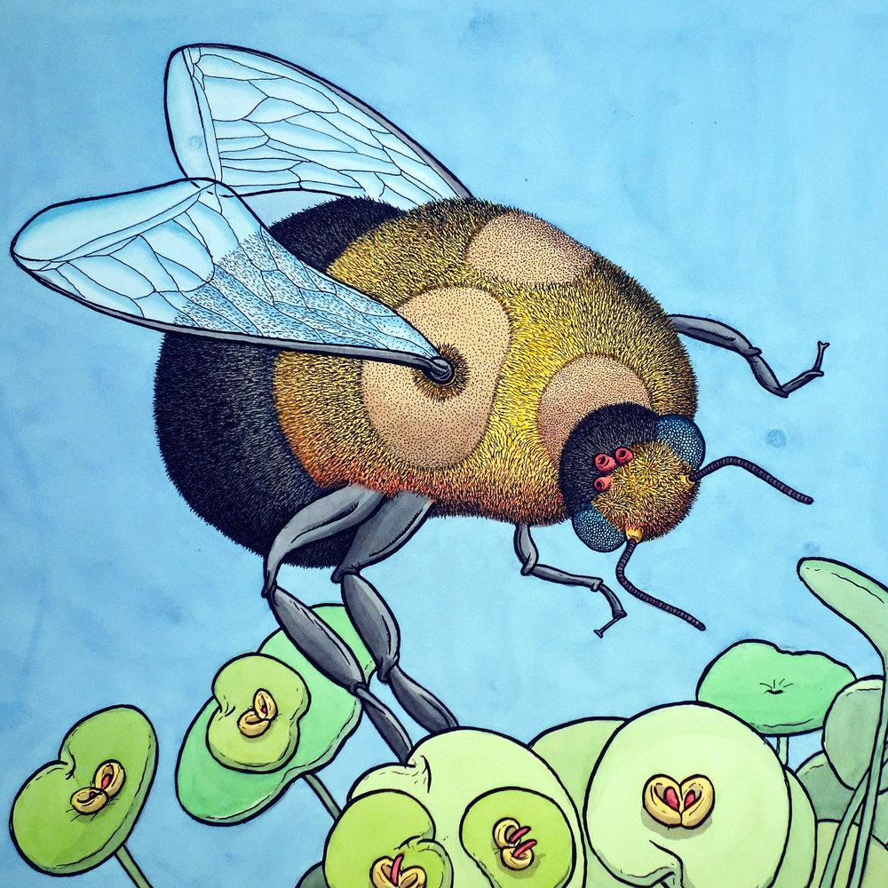 final-bee-b.jpg