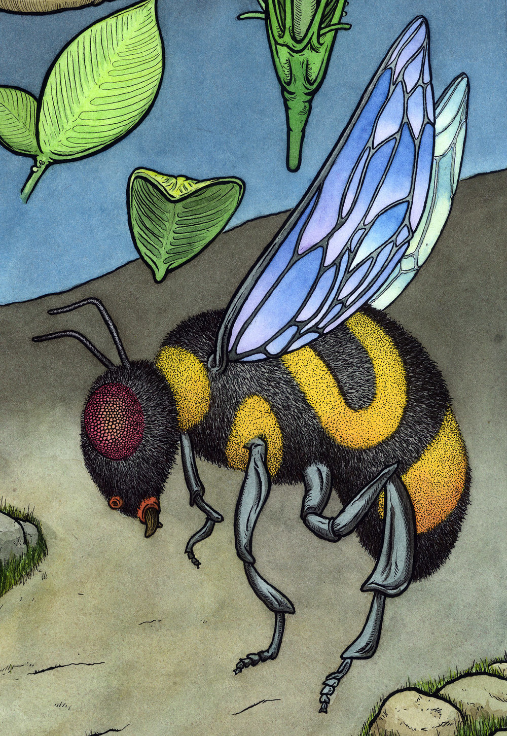 Beetail. Haha, get it? More bees, more flowers. Or more drawings from the Isle of Shoals.