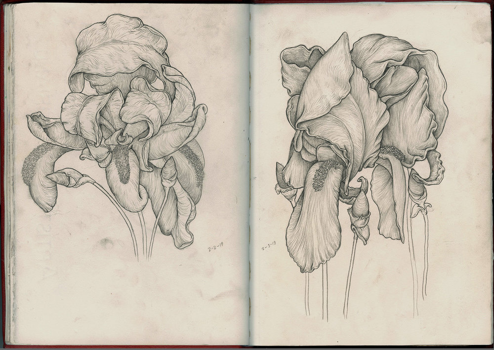 2 flowers graphite sketchbook SQ2.jpg