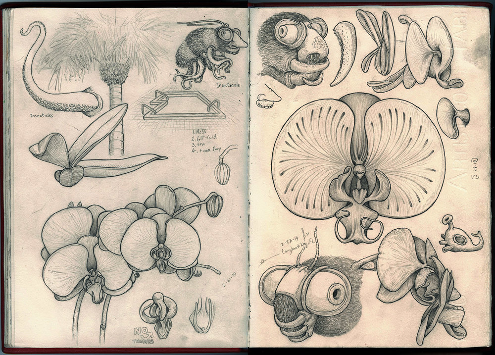 bee nose orchid sketchbook web.jpg