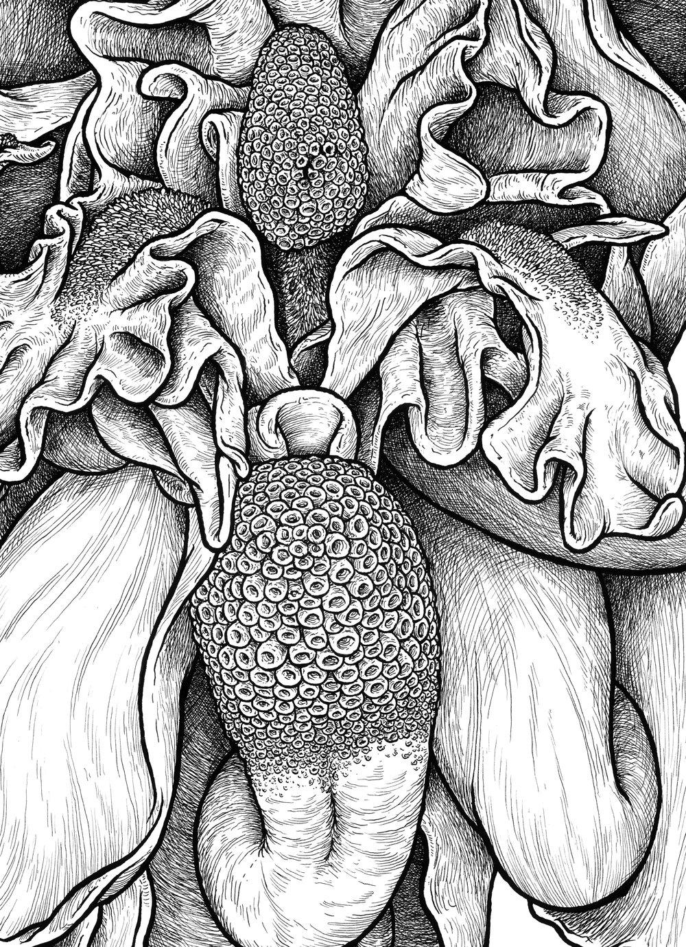 Beenose Flower detail.jpg
