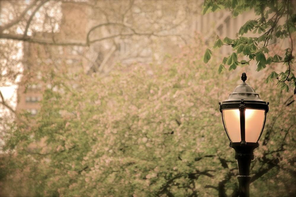 SpringTime© UXCine.jpg