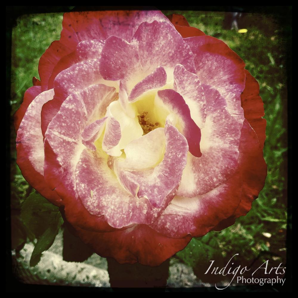 indigoartsflora026.jpg