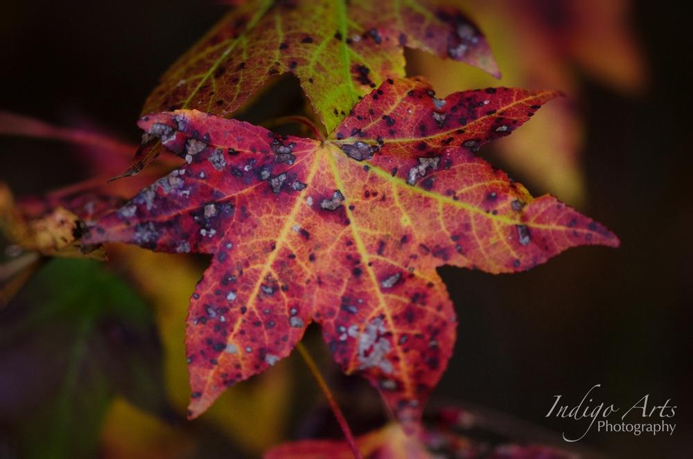 Pink Leaves