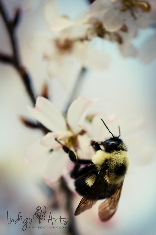 bee photograph