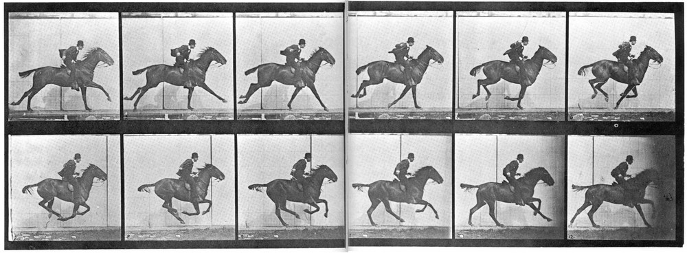 Muybridge_horse_gallop.jpg