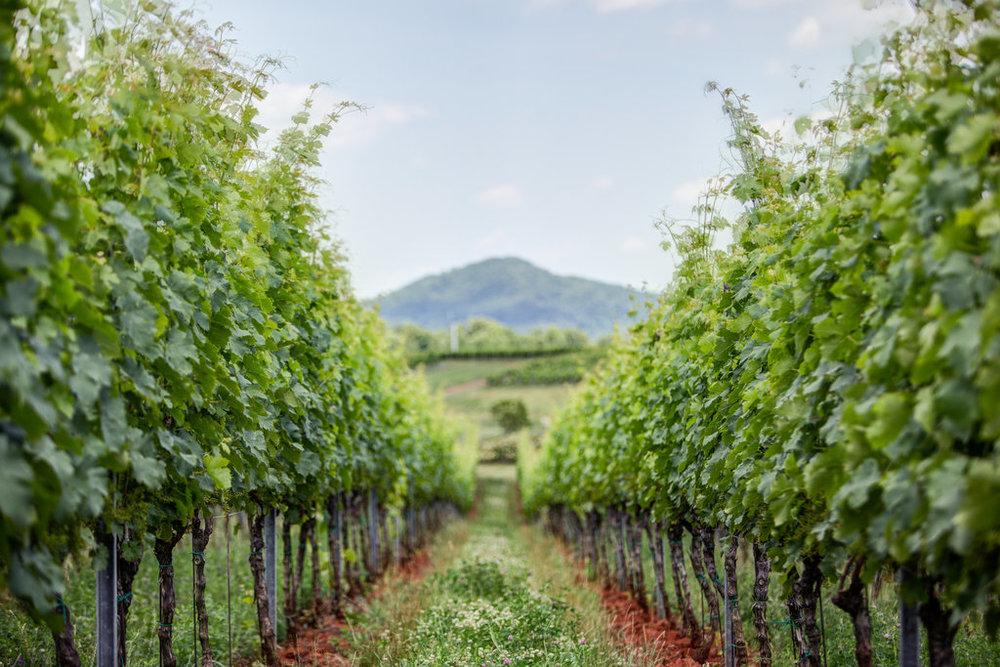 Andrea Hubbell - Early Mountain Vineyard 27.jpg