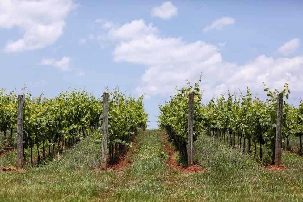 Andrea Hubbell - Early Mountain Vineyard 26.jpg