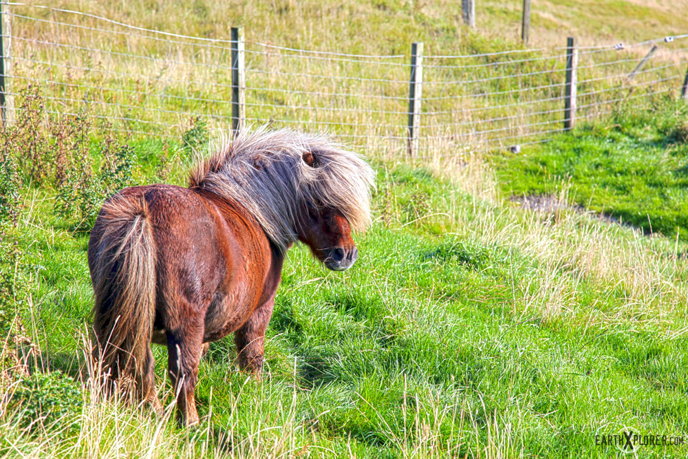 Shetland_Islands_4.jpg