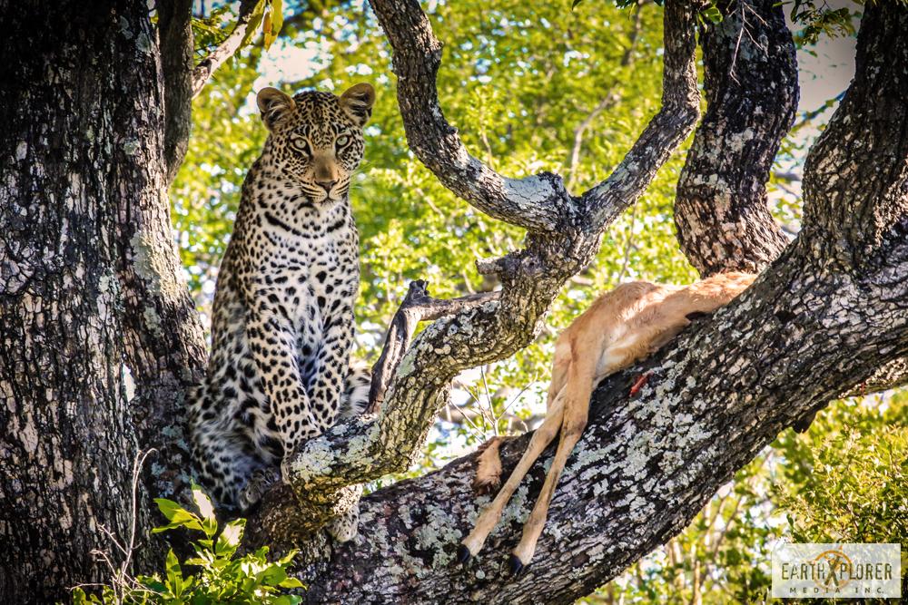 Leopard_Africa.jpg