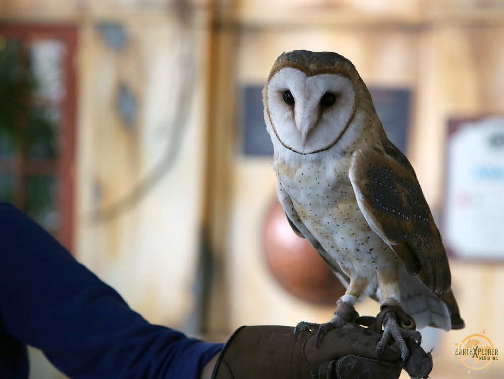 Beautiful Owl.jpg