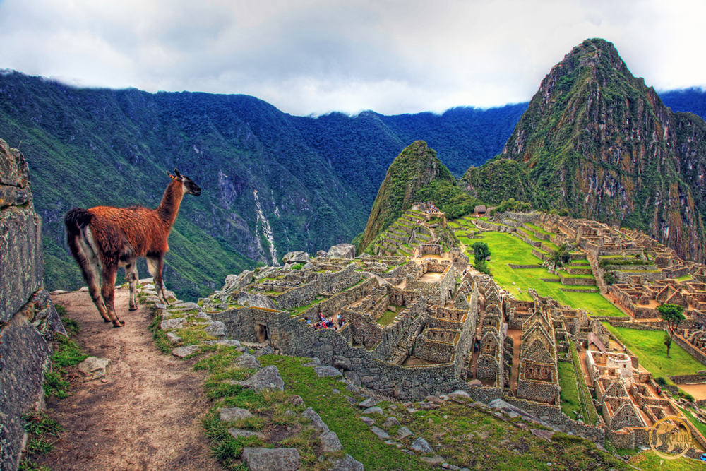 Lama at Machu Picchu.jpg