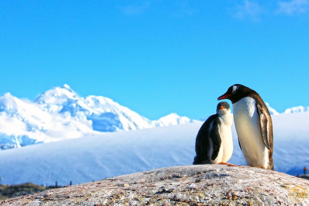 JD Andrews Penguins Antarctica.jpg