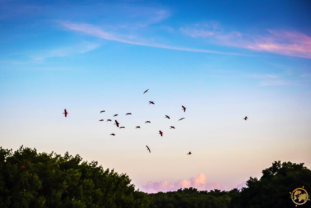 JD Andrews Birds Trinidad.jpg