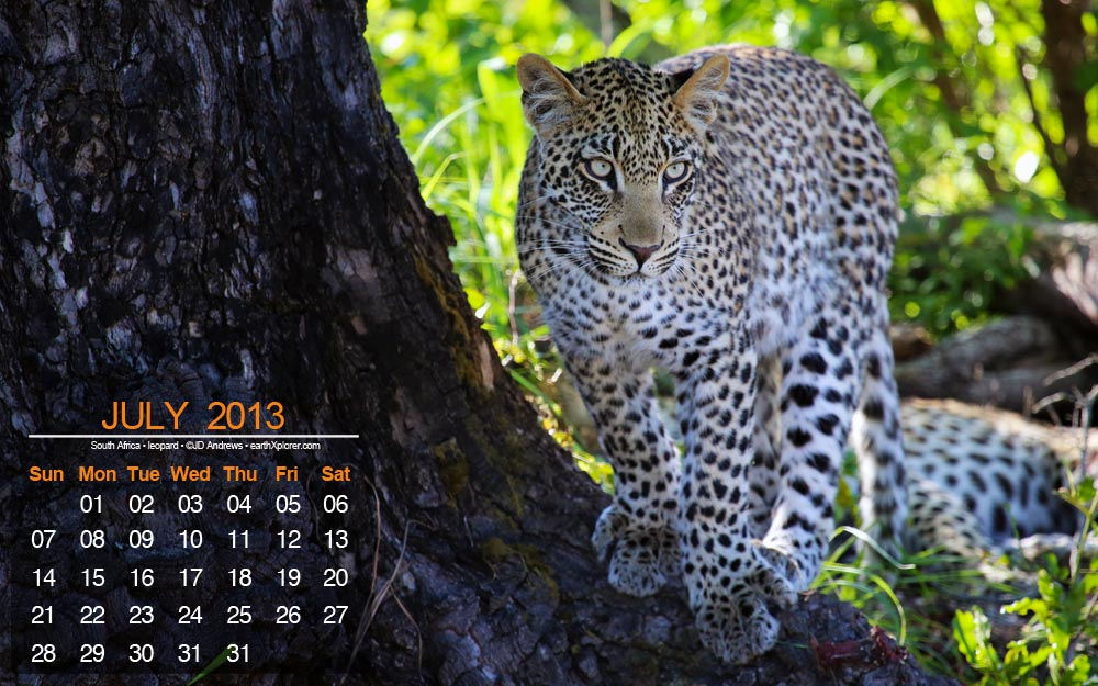 JULY 2013 Desktop Calendar.jpg