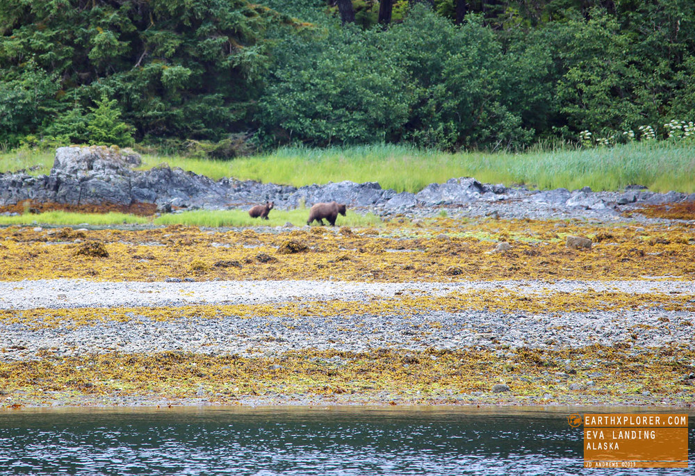 Brown bears are usually larger than black bears with a large shoulder hump and have longer, straighter claws. Grrrrrrrr