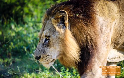 Kruger Park - South AfricaionL