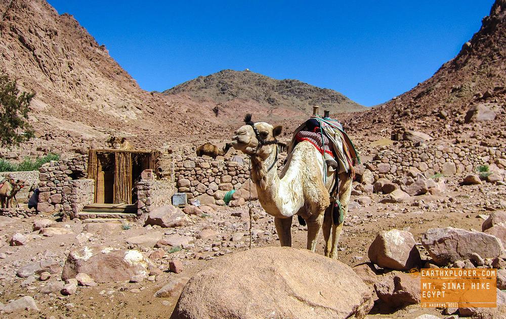 Mt Sinai Camel Egypt.jpg
