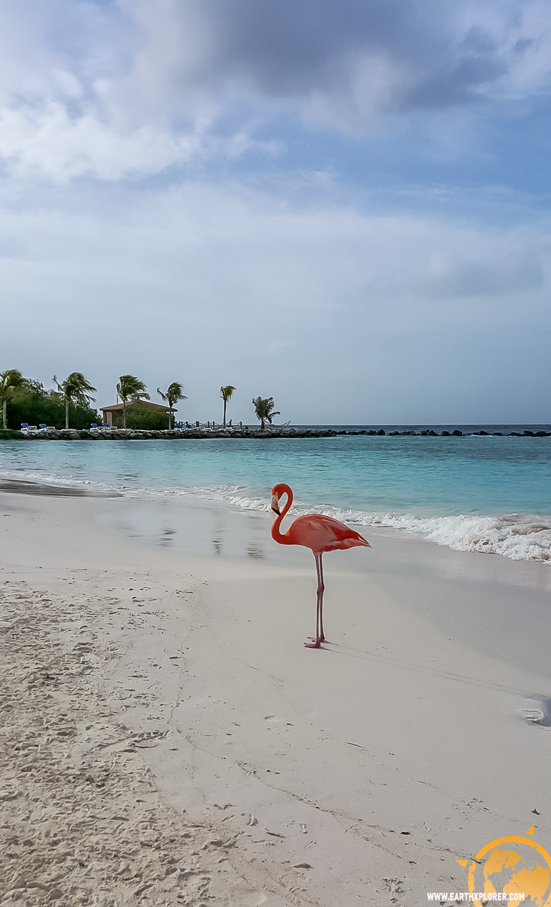 JDAndrews Aruba-38.jpg