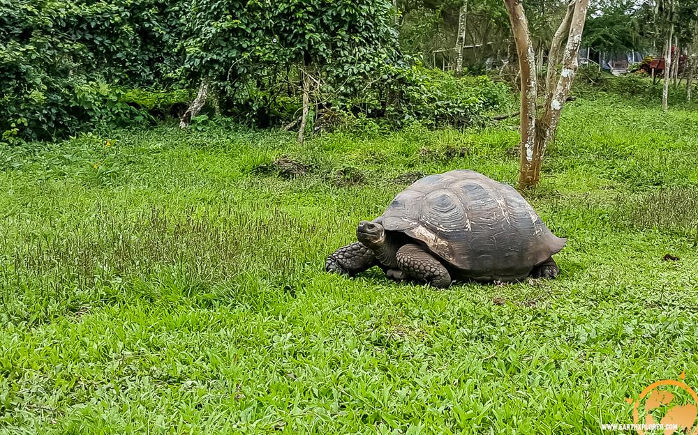 JDAndrews Galapagos-27.jpg