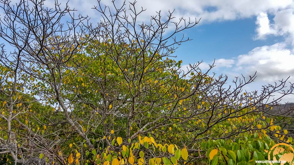 JDAndrews Galapagos-21.jpg