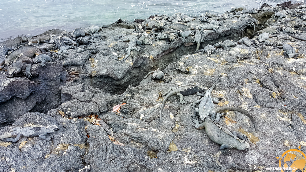 JDAndrews Galapagos-4.jpg