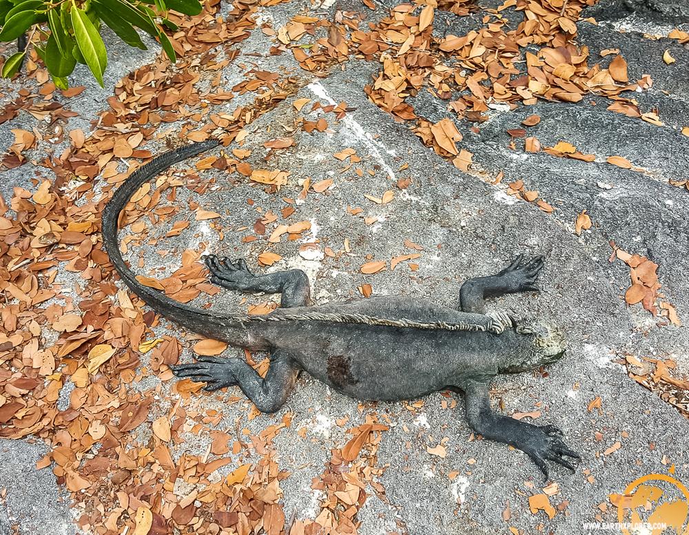 JDAndrews Galapagos.jpg