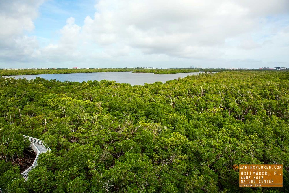 Great View Anne Kolb Nature Center Hollywood Florida.jpg