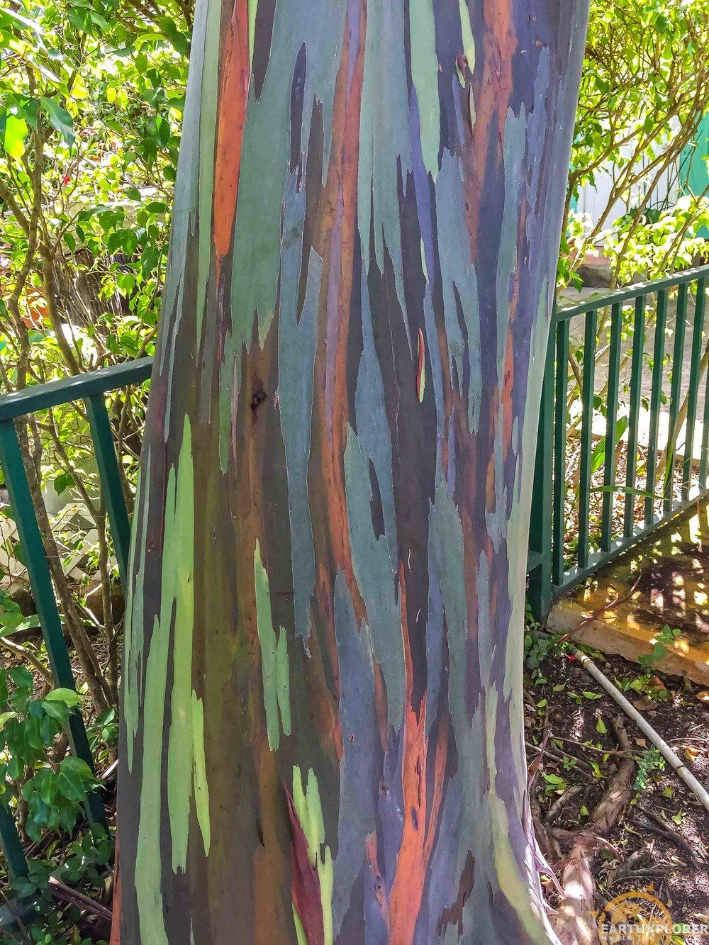 Nevis Botanical Gardens earthXplorer-11.jpg