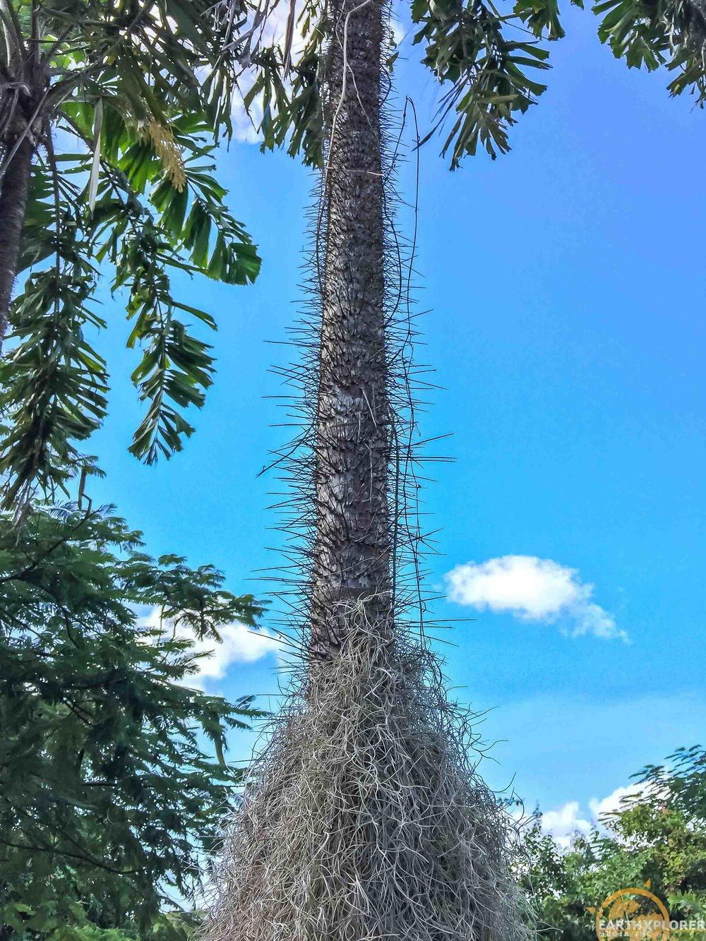 Nevis Botanical Gardens earthXplorer-8.jpg